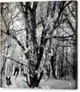 Woodland Fluff Acrylic Print