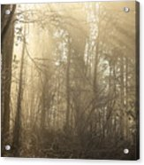 Woodland Glade 2 Acrylic Print