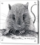 Woodland Jumping Mouse Acrylic Print