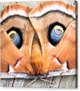 Woodland Moth Acrylic Print