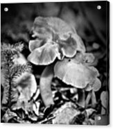 Woodland Mushrooms In Black And White Acrylic Print
