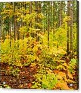 Woodland Panorama Acrylic Print