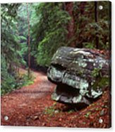 Woodland Path Naugatuck State Forest Acrylic Print