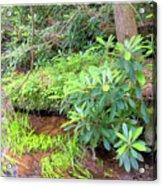 Woodland Stream Forest Interior Acrylic Print