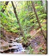 Woodland Stream Acrylic Print