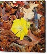 Woodland Surprise Acrylic Print