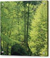 Woodland View With Stream, Sachsische Acrylic Print