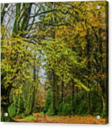 Woodland Walks #1 Acrylic Print