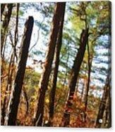 Woodlands Acrylic Print