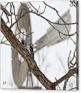 Woodpecker And Windmill Acrylic Print