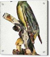 Woodpecker Red Heads Acrylic Print