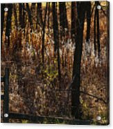 Woods - 2 Acrylic Print by Linda Shafer