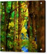 Woods Approach To Lake Acrylic Print