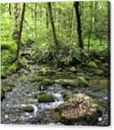 Woods - Creek Acrylic Print