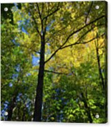 Woods In Nh Acrylic Print