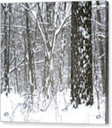 Woods In Winter Acrylic Print