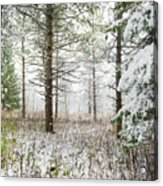 Woods In Winter At Retzer Nature Center  Acrylic Print