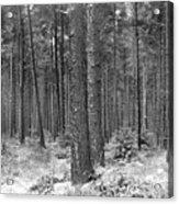 Woods In Winter, Slaley Acrylic Print