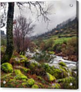 Woods Landscape Acrylic Print