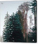 Woods Mist Acrylic Print by Lucinda  Hansen