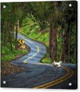 Woods Road 1 - Summer Acrylic Print
