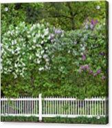 Woodstock Village Lilacs Acrylic Print