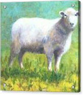 Woolly Acrylic Print