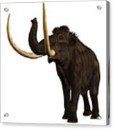 Woolly Mammoth Profile Acrylic Print