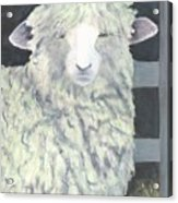 Wooly One Acrylic Print