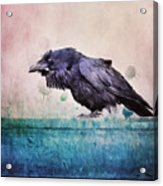 Words Of A Raven Acrylic Print