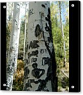 Words Written In The Trees 1 Acrylic Print