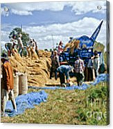 Workers Loading Rice Acrylic Print