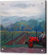 Working The Vineyard Acrylic Print by Becky Chappell