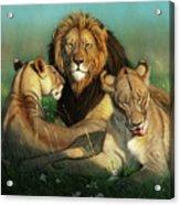 World Lion Day Acrylic Print