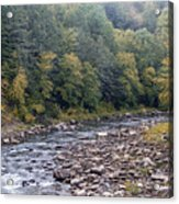 Worlds End State Park Loyalsock Creek Acrylic Print