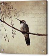 World's Smallest Bird Acrylic Print