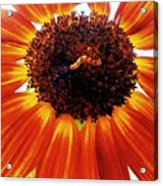 Worm And His Sunflower Acrylic Print