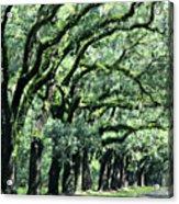 Wormsloe Georgia No. 7668 1 Of 3 Set Color Acrylic Print