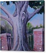 Wortham Oak Acrylic Print