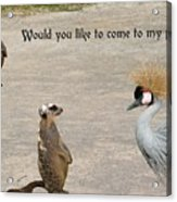 Would You Like To Come To My Party Acrylic Print
