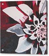Wow Dahlia Acrylic Print
