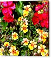 Wp Floral Study 1 2014 Acrylic Print