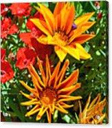 Wp Floral Study 5 2014 Acrylic Print