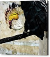 Wreathed Hornbill Perching Against Vintage Concrete Wall Backgro Acrylic Print