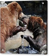 Wrestling Grizzly Bears In A Shallow River Acrylic Print