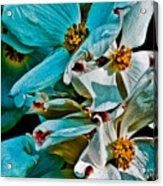 Wrinkly Petals Acrylic Print