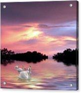 Sunset Swans Acrylic Print
