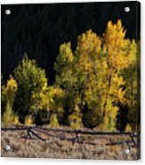 Wyoming Autumn Color One Acrylic Print