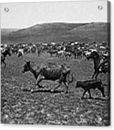 Wyoming: Cowboys, C1890 Acrylic Print