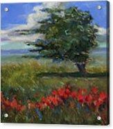 Wyoming Gentle Breeze Acrylic Print